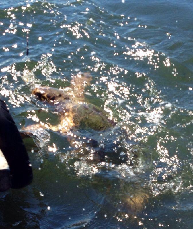 turtle dalyan